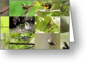 American Redstart Greeting Cards - Warblers in spring Greeting Card by Mircea Costina Photography
