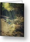 Water Reflections Greeting Cards - Warm My Soul Greeting Card by Laurie Search
