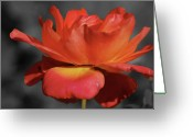 Macro Greeting Cards - Warm Rose Greeting Card by Kimberly Gonzales