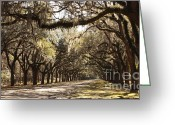 Tree-lined Greeting Cards - Warm Southern Hospitality Greeting Card by Carol Groenen