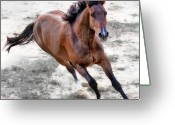 On The Move Greeting Cards - Warmblood Horse Galloping Greeting Card by Vanessa Mylett