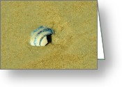 Shell Texture Greeting Cards - Washed Ashore Greeting Card by JAMART Photography