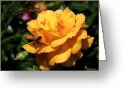 Kingston Greeting Cards - Wasp On Yellow Rose Greeting Card by Richard Gregurich