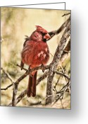 Hdr Look Photo Greeting Cards - Watch Me Greeting Card by Mike OBrien