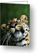 Big Cat Art Prints Greeting Cards - Watch the Birdie Greeting Card by Bill Fleming