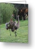 Sandhill Crane Greeting Cards - Watch Your Parents Greeting Card by Carol Groenen