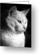 Black And White Cat Greeting Cards - Watchful Greeting Card by Bob Orsillo