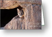 Feline Greeting Cards - Watchful Eyes Greeting Card by Sandra Bronstein