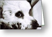 Petstagram Greeting Cards - Watching Greeting Card by Natasha Marco