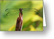 Black Wings Greeting Cards - Watching You Watching Me Greeting Card by Suzanne Gaff