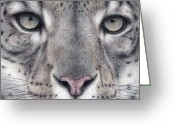 Colored Pencil Greeting Cards - Watching You...Snow Leopard Greeting Card by Pat Erickson