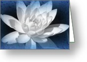 Water Lilly Greeting Cards - Water Droplet Lilly Greeting Card by Debra     Vatalaro
