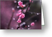 Pink Flower Branch Greeting Cards - Water Droplets On Sakura Blossoms Greeting Card by Joey Lim