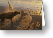 Domestic Scenes Greeting Cards - Water Drops Fly As Dogs Shake Greeting Card by Stacy Gold