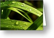Mario Brenes Simon Greeting Cards - Water drops Greeting Card by Mario Brenes Simon