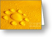 Drop Photo Greeting Cards - Water Flower Greeting Card by Carlos Caetano