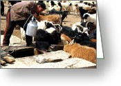 Older Woman Photo Greeting Cards - Water for the Goats Greeting Card by Diane Height