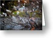 Raining Greeting Cards - Water Fowl Condo Greeting Card by DigiArt Diaries by Vicky Browning