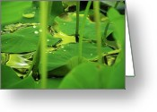 Designers Choice Photo Greeting Cards - Water Garden Greeting Card by Don Wright