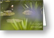 Aquatic Flower Greeting Cards - Water Garden Greeting Card by Heiko Koehrer-Wagner