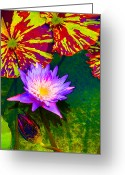 Digital Flower Greeting Cards - Water Lilies Greeting Card by Amy Vangsgard