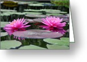 Bill Cannon Greeting Cards - Water Lilies Greeting Card by Bill Cannon