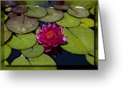Charles Warren Greeting Cards - Water Lilly 4 Greeting Card by Charles Warren