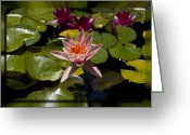Charles Warren Greeting Cards - Water Lilly 6 Greeting Card by Charles Warren