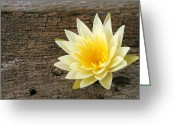 Growing Water Greeting Cards - Water Lilly Greeting Card by Darren Fisher