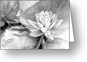 Pads Drawings Greeting Cards - Water Lilly Greeting Card by Laurianna Taylor