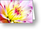 Lilly Pad Painting Greeting Cards - Water Lilly Greeting Card by Shere Crossman
