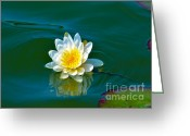 Aquatic Flower Greeting Cards - Water Lily 4 Greeting Card by Julie Palencia