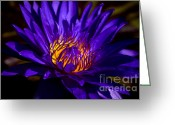 Aquatic Flower Greeting Cards - Water Lily 7 Greeting Card by Julie Palencia