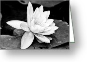 Flower Photograph Greeting Cards - Water Lily Flower Greeting Card by Gordon Wood