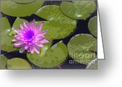 Lilly Pad Greeting Cards - Water Lily in Comic Relief Greeting Card by Joan Carroll