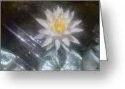 Blossoms Greeting Cards - Water Lily in Sunlight Greeting Card by Jeff Kolker