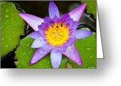 Macro Greeting Cards - Water lily Greeting Card by Johan Larson