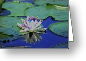 Lily Pad Greeting Cards - Water Lily  Greeting Card by Karol  Livote