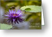 Hawaiian Pond Greeting Cards - Water Lily Kissing the Water Greeting Card by Sabrina L Ryan