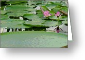 Lilies Greeting Cards - Water Lily Land III Greeting Card by Suzanne Gaff