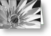 Hawaiian Pond Greeting Cards - Water Lily Macro in Black and White Greeting Card by Sabrina L Ryan