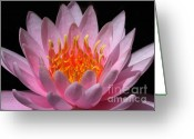 Water Gardens Greeting Cards - Water Lily on Fire Greeting Card by Sabrina L Ryan