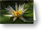 Rudi Prott Greeting Cards - Water Lily Greeting Card by Rudi Prott