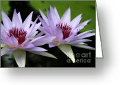 Hawaiian Pond Greeting Cards - Water Lily Twins Greeting Card by Sabrina L Ryan