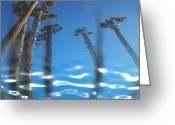 Tricks Greeting Cards - Water Palms Greeting Card by Stephen Lawrence Mitchell