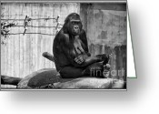 Loud Greeting Cards - Watercolor Gorilla Greeting Card by Joan Carroll