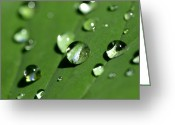 Moist Greeting Cards - Waterdrops Greeting Card by Melanie Viola