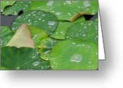Lotus Greeting Cards - Waterdrops on lotus leaves Greeting Card by Silke Magino