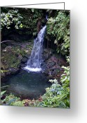 St. Lucia Photographs Greeting Cards - Waterfall Greeting Card by Bill Mortley