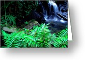 Puerto Rico Greeting Cards - Waterfall El Yunque National Forest Greeting Card by Thomas R Fletcher